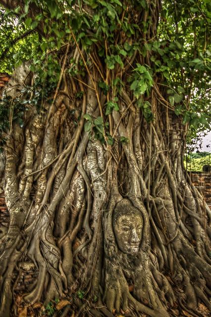 Bodiless Buddha in Bodhi tree