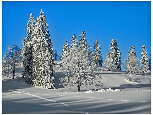 Swiss Winter Time... January 1,2009. 16:33:06.La Vue-des- Alpes. Canton of Neuchatel, No. 9990.