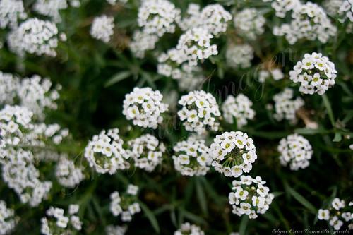 Una florecita...