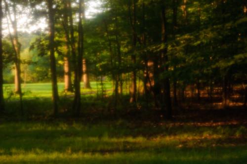 trees sunset newjersey unitedstates nj pinhole springfield digitalpinhole unioncounty briantpark baltusrol f177 unioncountyparks lensbabycomposer