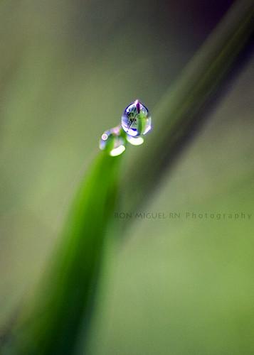 macro dewdrops northcarolina hungry kernersville rebelxti canoneos400d canonrebelxti ronmiguelrn