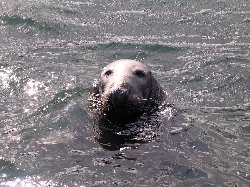 Seal 05