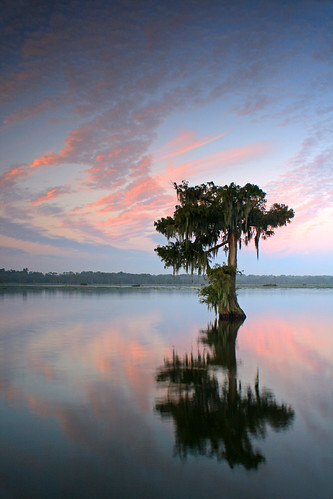 morning lake reflection tree water sunrise canon rebel la moss louisiana lafayette swamp cypress lakemartin breauxbridge xti benpierce cypressislandpreserve photocontesttnc09