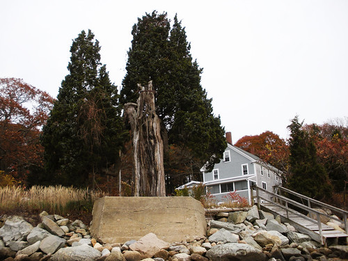 Blairhaven, aged cedar still presiding