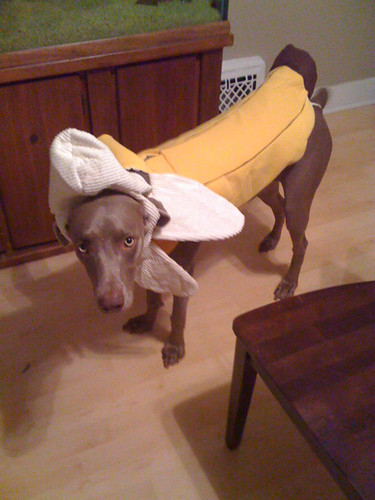 Ulis Halloween Costume Shes Gonna Be A Banana This Was Flickr