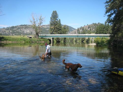 bridge dogs river washington montana baxter goldenretrievers kettleriver ferrycounty