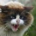 gato en Boiro by IES-MGB