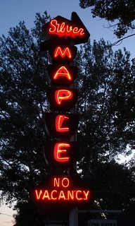 Silver Maple 06   by Tom Hilton