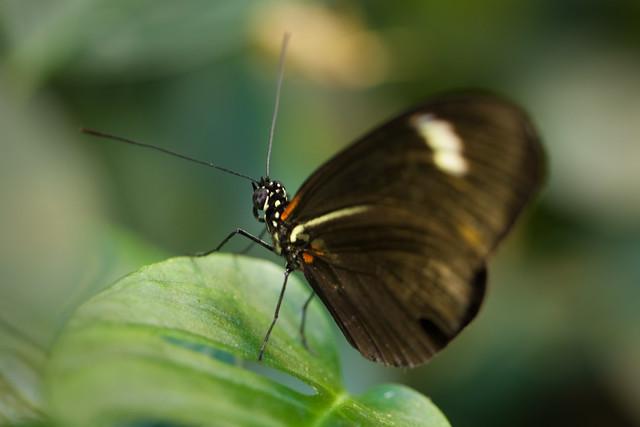 Butterfly Palace 5819