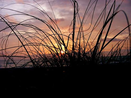 amelia sunrise #2