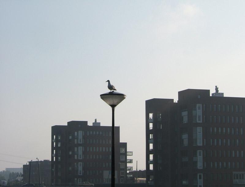 seagull skyline