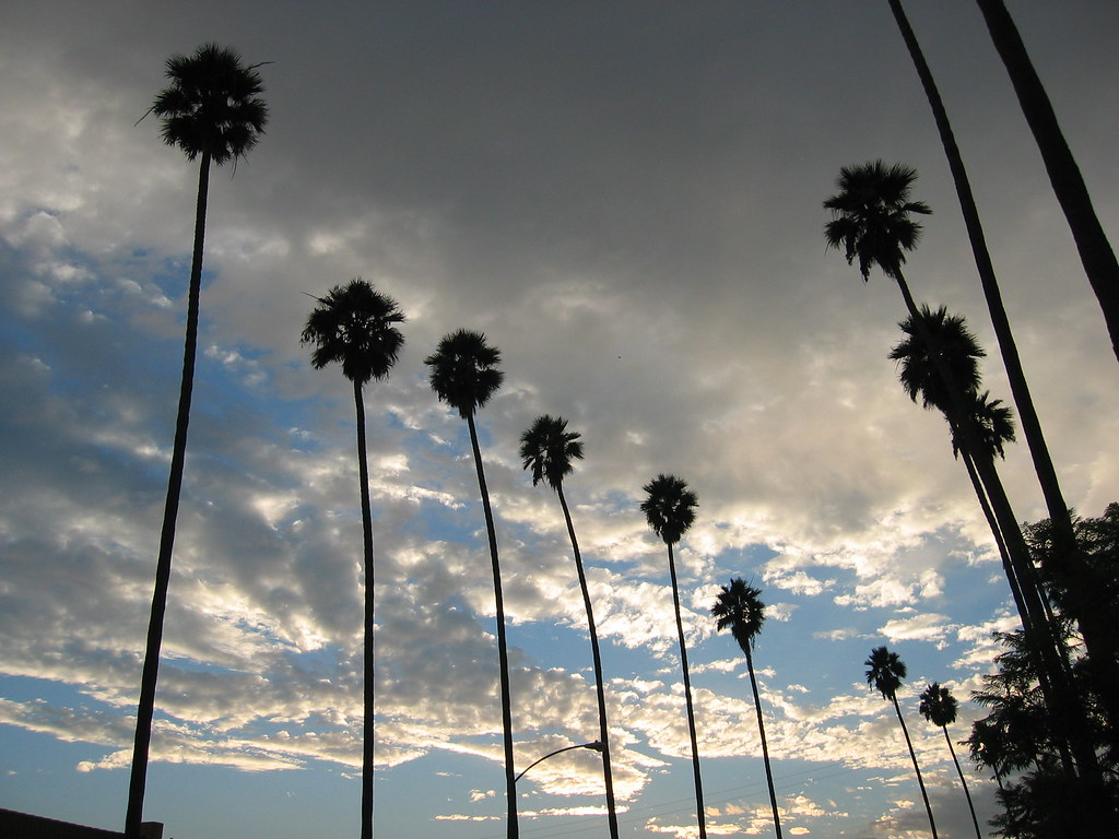 Palm Trees Los Angeles Los Angeles Wallpaper And Palm Trees