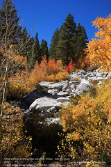A lone red tree among golden and green foliage - near the ranger camp | by TTVo