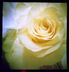 Pinhole Rose | by alspix