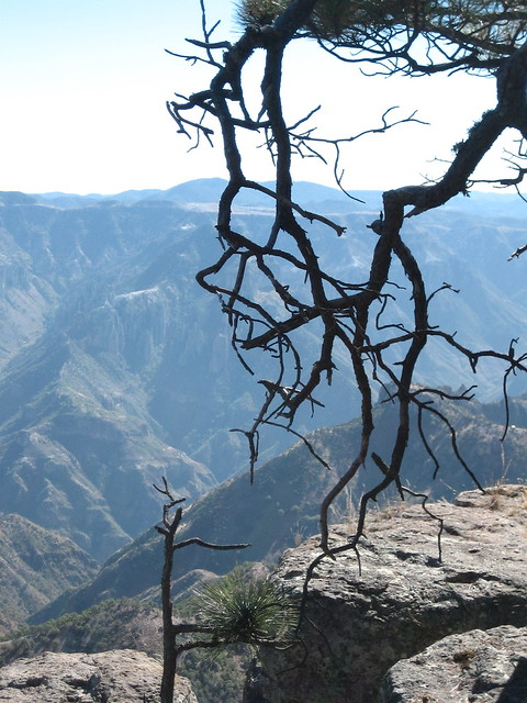 Overlooking the Copper Canyon
