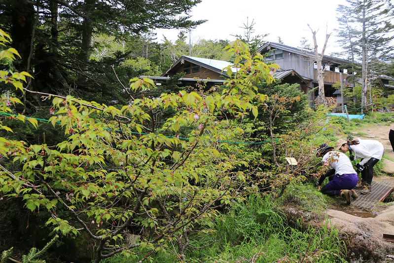 2014-06-29_00586_天狗岳.jpg