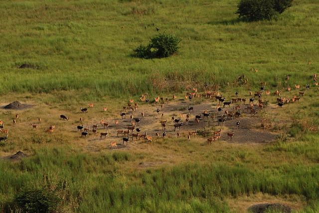 kob-migration-gambella-national-park-1