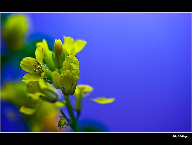 Amarillo y Azul - Yellow & Blue