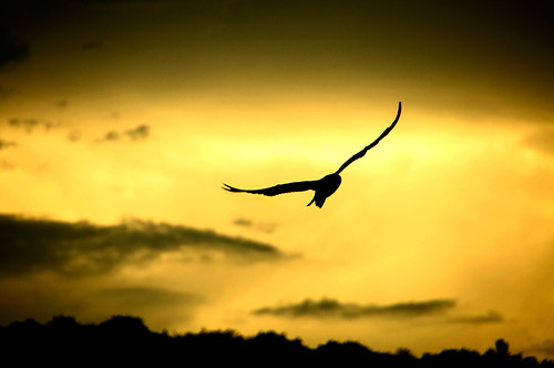 sunset sky bird silhouette clouds freedom flying escape seagull soaring possibilities