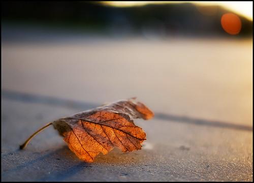 autumn sunset fall leaf hills chatsworth