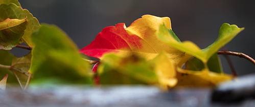 Wien - Herbstblatt