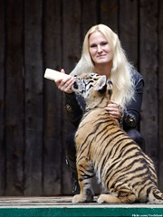 Big Cat Show - Baby Tiger