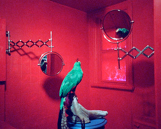 Victory Red Bathroom With Parrot X-Pro03