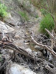 Coal Canyon Hike 3369 | by colleengreene