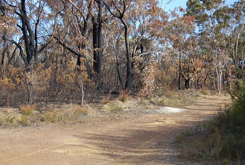Burnt North Lawson Park | by simone-walsh