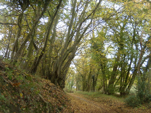 First hint of Autumn Watton-at-Stone Circular
