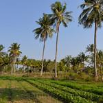 16 Kampot 25