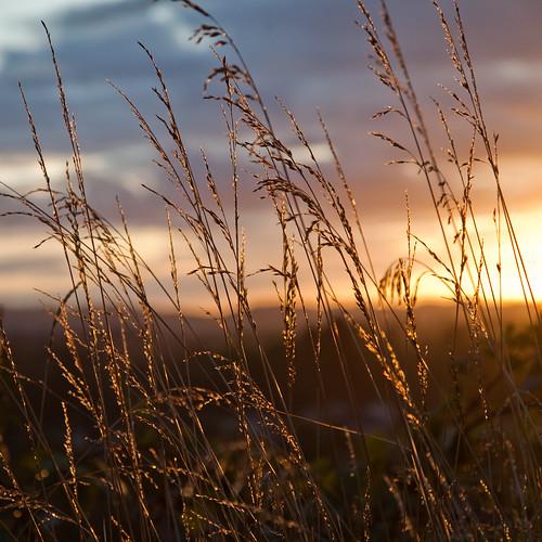 light sunset sun storm grass clouds oregon canon square 5d springfield outlines