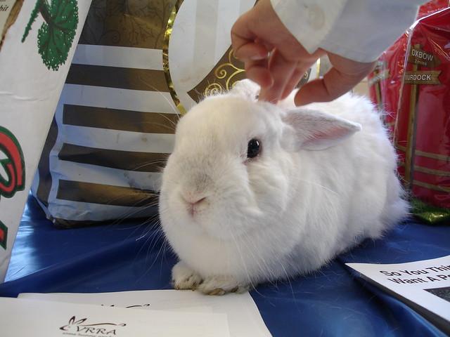 Rabbit Festival