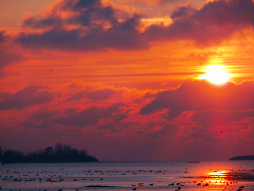 red lake water birds clouds sunrise michigan erie catchycolorsorange