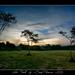 The Field   |    Panorama  | DRI by Boby Pirovics