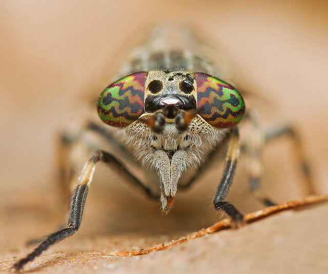 bug eyes :)