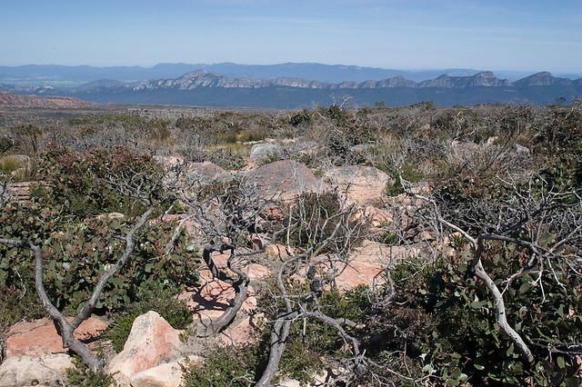 Bomjinna-Mt William Track-34