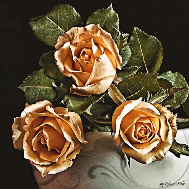 Just three roses ..