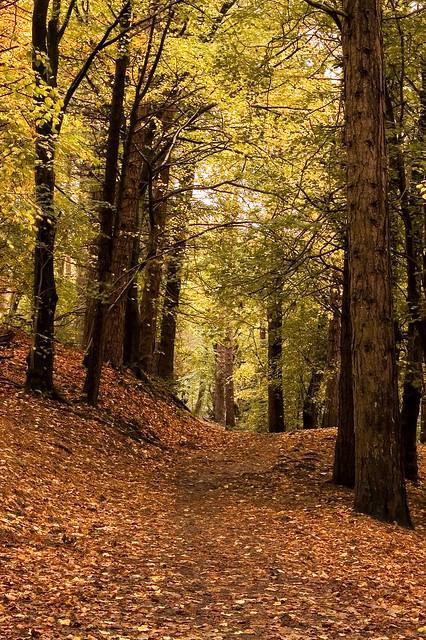 Sunnyhurst Woods