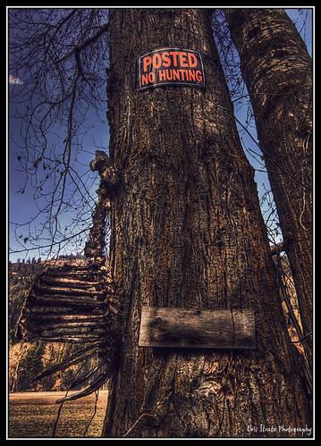tree sign warning geotagged skeleton hunting deer remains carcass deaddeer nohunting deercarcass geo:lat=48961511 geo:lon=118766488