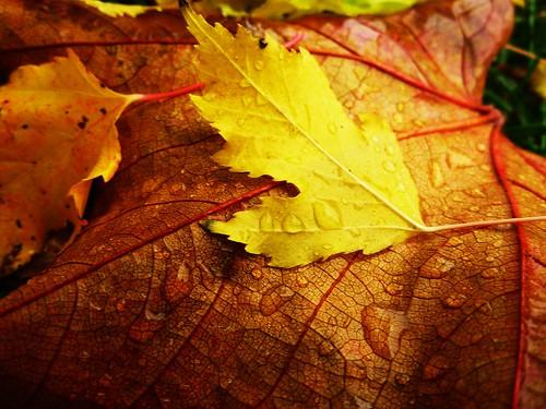 Autumn Complexion