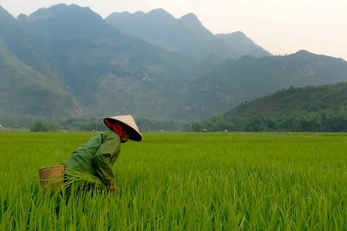 Vietnam | by Padmanaba01
