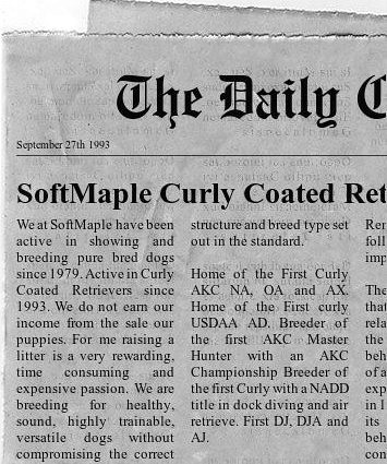 newspaper | by softmaple