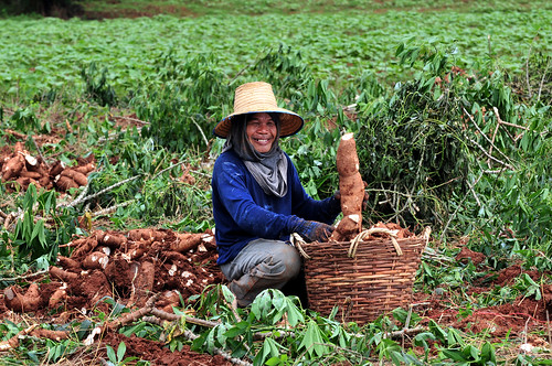 thailand 24_lo | by CIAT International Center for Tropical Agriculture