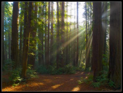 california lighting morning trees green nature sunshine fog landscape oakland haze postcard scenic landmark olympus explore sunburst redwoods e3 alamedacounty 1000views californialandscape zd 1260mm olympuse3