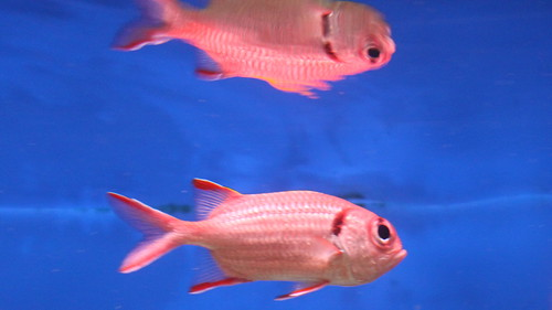 fish flower reflection swim canon aquarium restaurant tank fin lockkey floridal flutterbye216