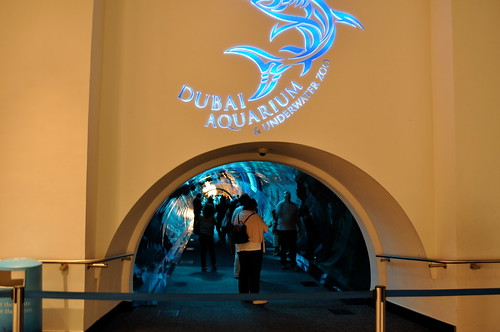 Aquarium inside Dubai Mall   by Jason Bagley
