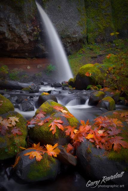 Autumn Leaves at Ponytail Falls - DSC_0015-4
