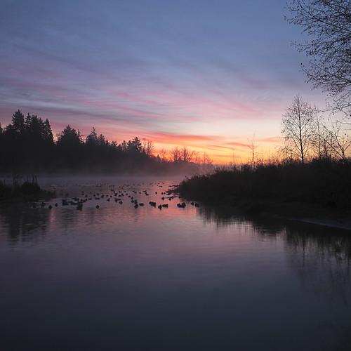 autumn mist fall sunrise dawn december ducks surrey morningmist canonef1740mmf40lusm surreylake kvdl