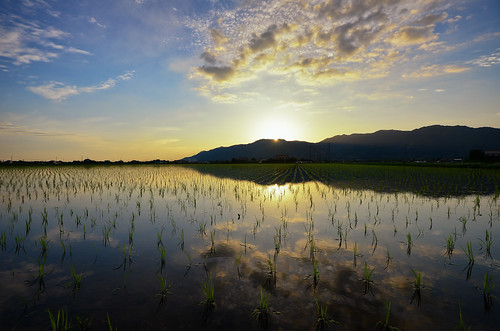sun mountain reflection nature japan clouds evening countryside nikon rice dusk farm wide highcontrast filter 日本 shimane agriculture ricefield 雲 japaneseculture 田んぼ 夕方 sanin d600 田舎 稲 島根 1635mm 出雲 農業 tanbo 山陰 colorefex 長閑 斐川 ひかわ 今在家